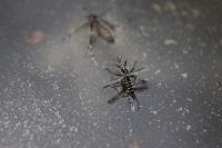 蚊に刺されたかゆみの原因!成分から考える3つの対処