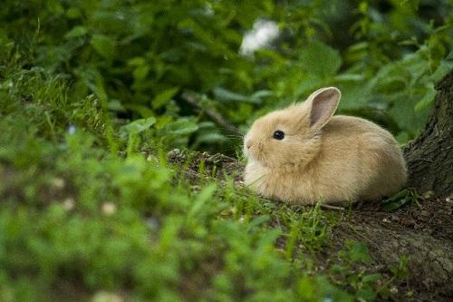 イースター ウサギ