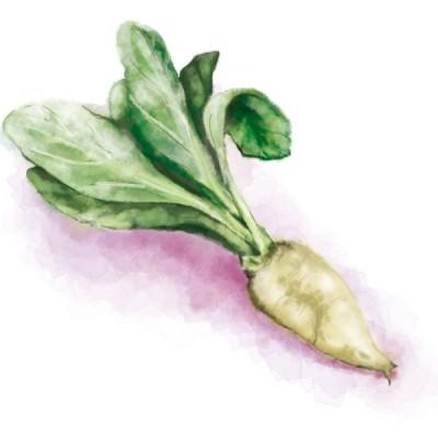 てんさい糖 野菜 形