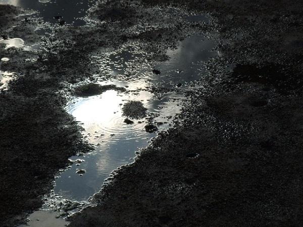 梅雨 濡れた土 除草剤