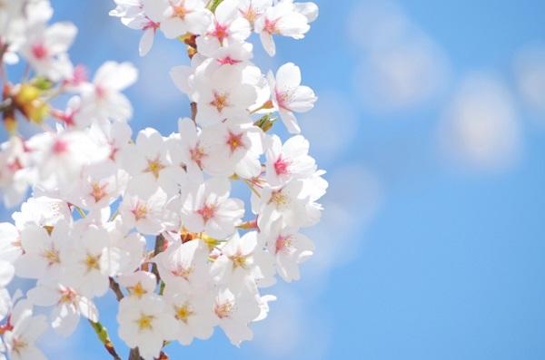 今年の春一番はいつ頃なの?