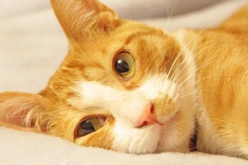 猫を飼いたい!引き取りたい時はどこへ行けばいいの?